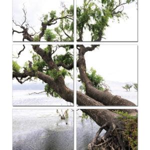 Posters Obraz Klanící se strom