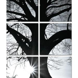 Posters Obraz Strom - silueta (B&W)