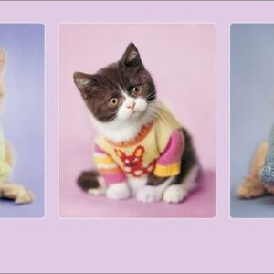 Posters Reprodukce Rachael Hale - Kitty Couture