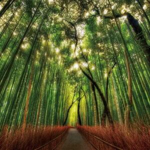 Posters Skleněný Obraz Bambusový les - Přímá stezka