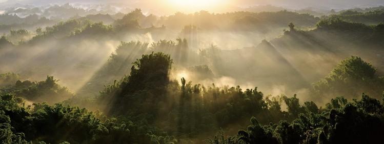 Posters Skleněný Obraz Pohled na les se slunečnými paprsky