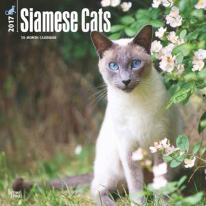 Posters Kalendář 2017 Siamské kočky - Posters