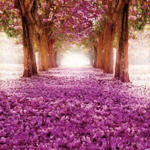 Posters Fototapeta Flowers Tree Path Pink 254x184 cm - 115g/m2 Paper - Posters