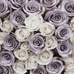 Posters Fototapeta Roses Flowers Purple White 254x184 cm - 115g/m2 Paper - Posters