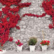 Posters Fototapeta Red Flowers Stone Wall 254x184 cm - 115g/m2 Paper - Posters