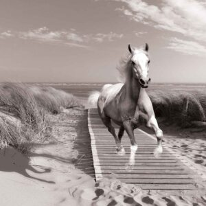 Posters Fototapeta White Horse Beach Grey 254x184 cm - 115g/m2 Paper - Posters
