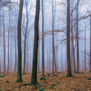 Posters Fototapeta Nature Wood Forest 254x184 cm - 115g/m2 Paper - Posters