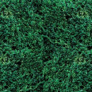 Posters Fototapeta Grass Texture 254x184 cm - 115g/m2 Paper - Posters