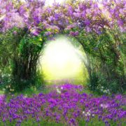 Posters Fototapeta Flowers Purple Forest Light Beam Nature 254x184 cm - 115g/m2 Paper - Posters
