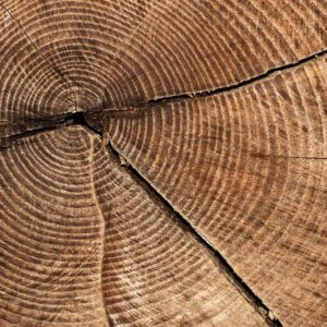 Posters Fototapeta Tree Stump Rings 254x184 cm - 115g/m2 Paper - Posters