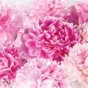 Posters Fototapeta Pink Carnations 104x70.5 cm - 130g/m2 Vlies Non-Woven - Posters