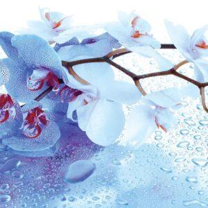 Posters Fototapeta Flowers Orchids Nature Drops 152.5x104 cm - 130g/m2 Vlies Non-Woven - Posters