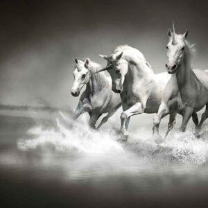 Posters Fototapeta Unicorns Horses Black White 152.5x104 cm - 130g/m2 Vlies Non-Woven - Posters