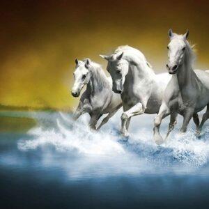 Posters Fototapeta Horses 254x184 cm - 115g/m2 Paper - Posters