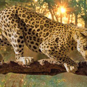 Posters Fototapeta Leopard 152.5x104 cm - 130g/m2 Vlies Non-Woven - Posters
