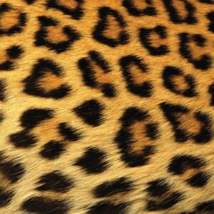 Posters Fototapeta Leopard 250x104 cm - 130g/m2 Vlies Non-Woven - Posters