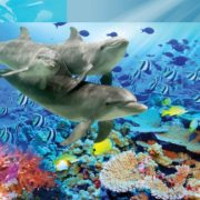 Posters Fototapeta Dolphins Tropical Fish 104x70.5 cm - 130g/m2 Vlies Non-Woven - Posters